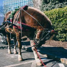 Horse Drawn Carriage from Philadelphia Trolley Works and 76 Carriage Company at February's Main Line Bridal Event