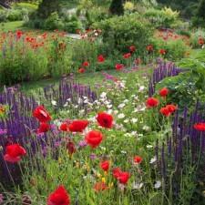 Chanticleer Garden Meadow (Photo Credit: Lisa Roper)