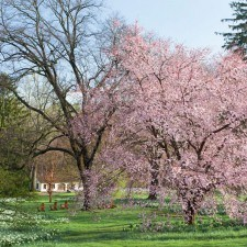 Chanticleer Garden Orchard Lawn (Photo Credit: Lisa Roper)