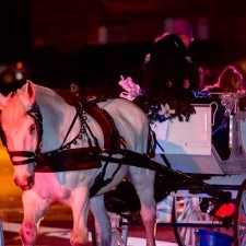 Attendees enjoyed Horse Drawn Carriage Rides through Wayne